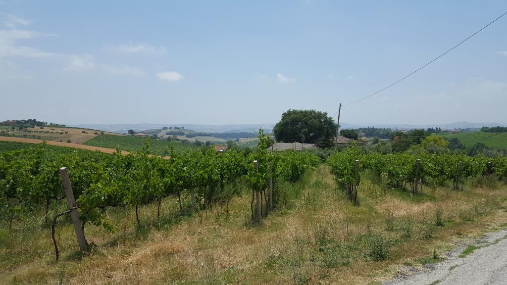 Wijnvelden 2.jpg