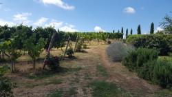 Wijnvelden 3.jpg