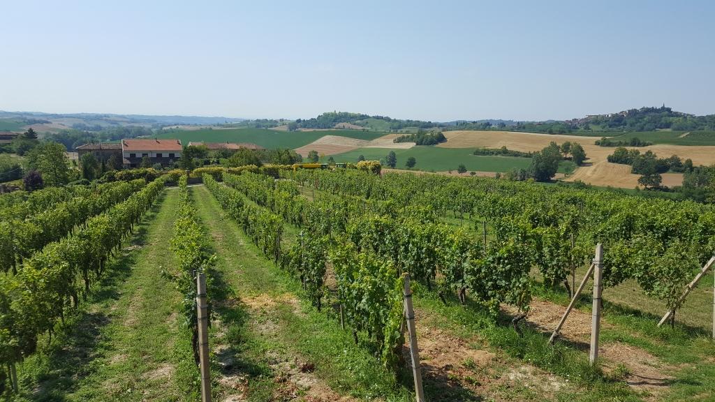 Wijnvelden 4.jpg